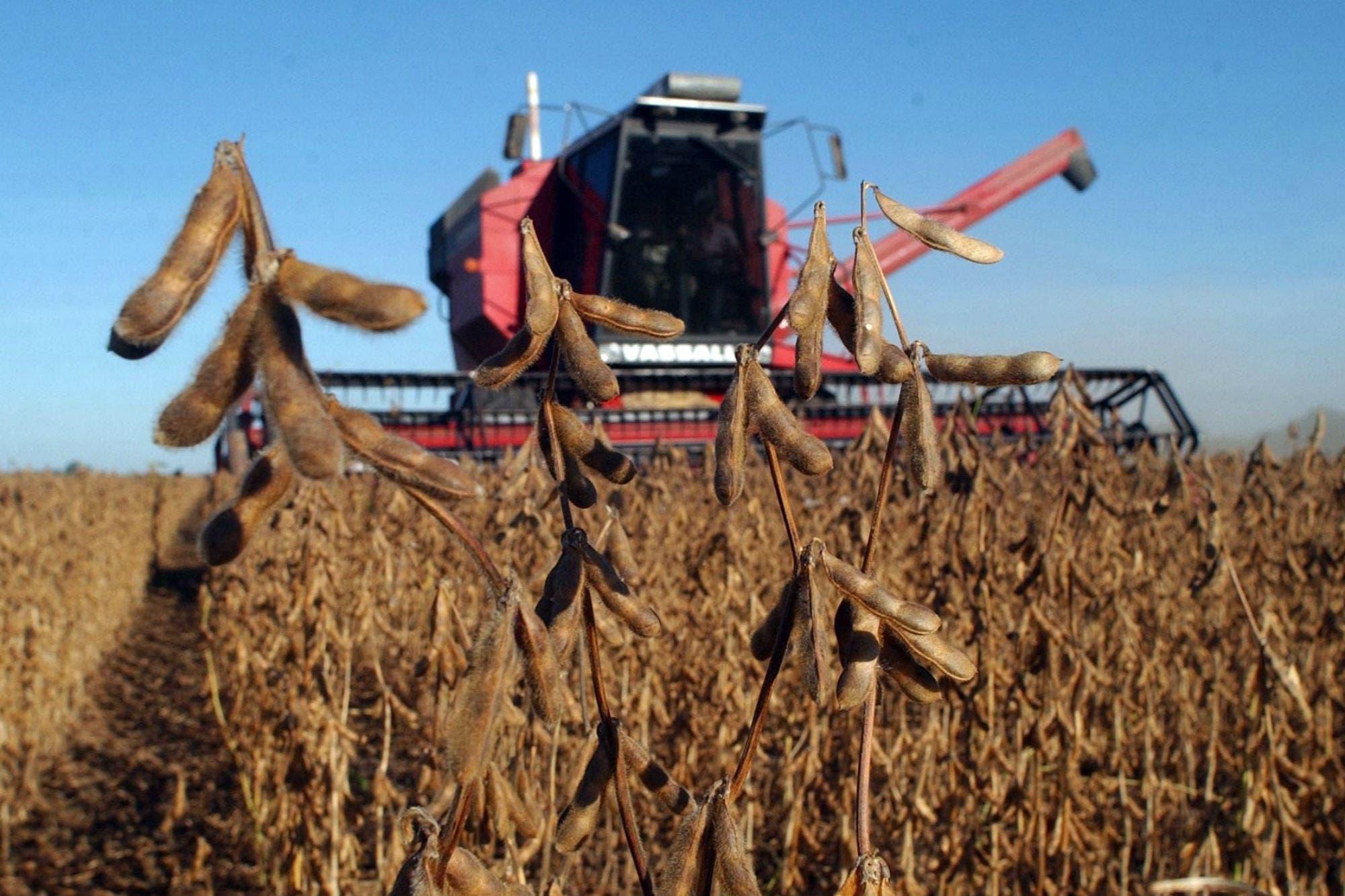 Soja, trigo y maíz. Revelan que el campo perderá plata con más retenciones a los principales cultivos