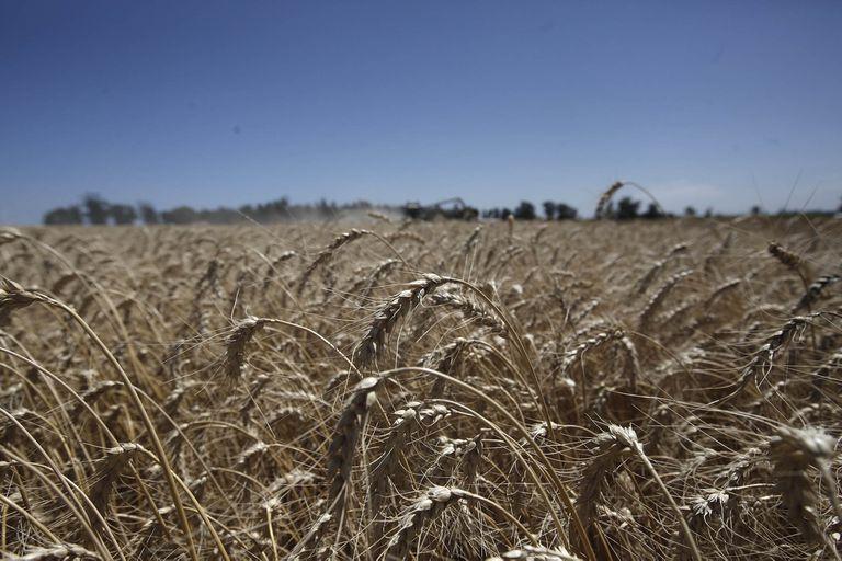 en-trigo/soja-los-impuestos-se-llevaran-el-62%-del-margen-neto-de-un-productor