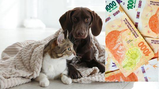 compania-cara:-mantener-una-mascota-supera-los-$10.000-por-mes